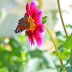potager-colbert-maison-papillons-1