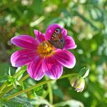 potager-colbert-maison-papillons-2