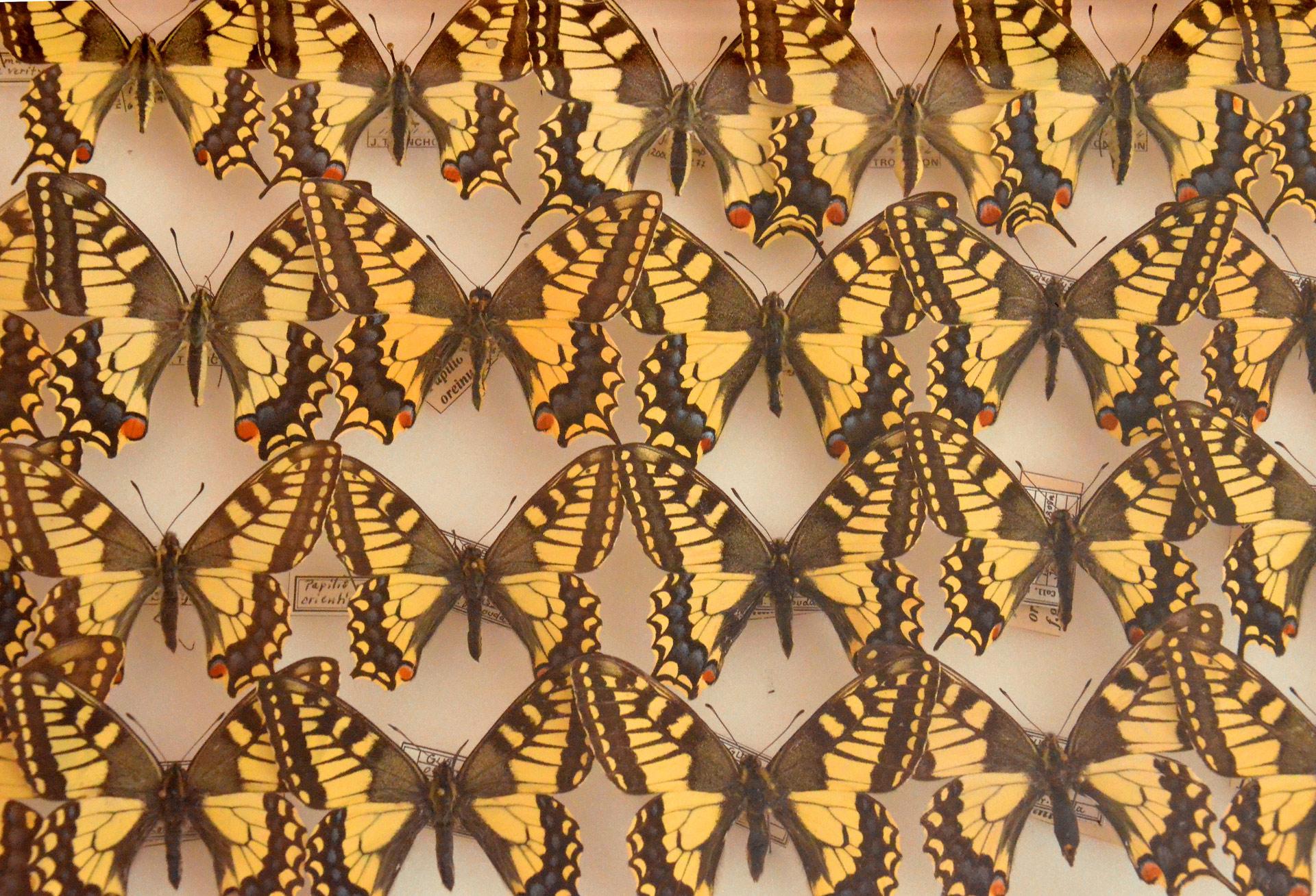 potager-colbert-maison-papillons-3