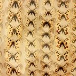 potager-colbert-maison-papillons-4