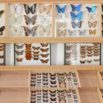potager-colbert-maison-papillons-5